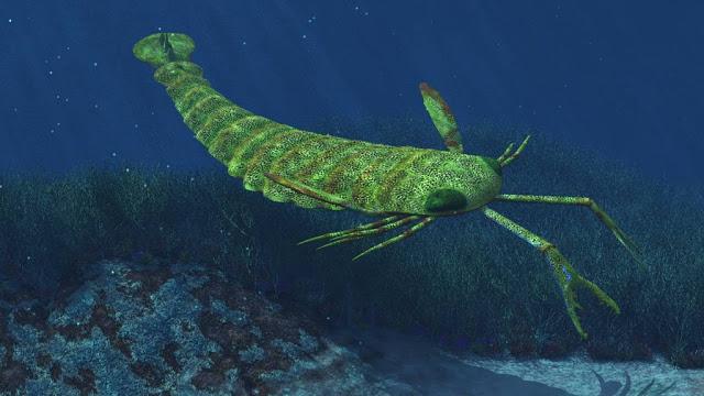 pterygotus 2